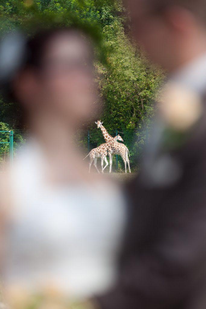 heiraten auf Schloss Friedrichsfelde Giraffen-Love